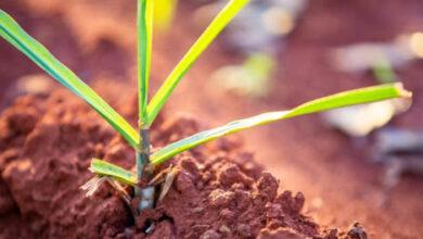 Photo of Países querem dobrar uso de bioenergia até 2030