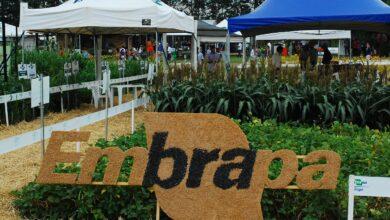 Photo of Embrapa quer produzir diesel verde a partir de carcaça de aves