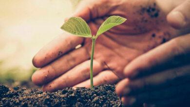 Photo of Governo aprova criação de plano para combustíveis sustentáveis e de baixo carbono